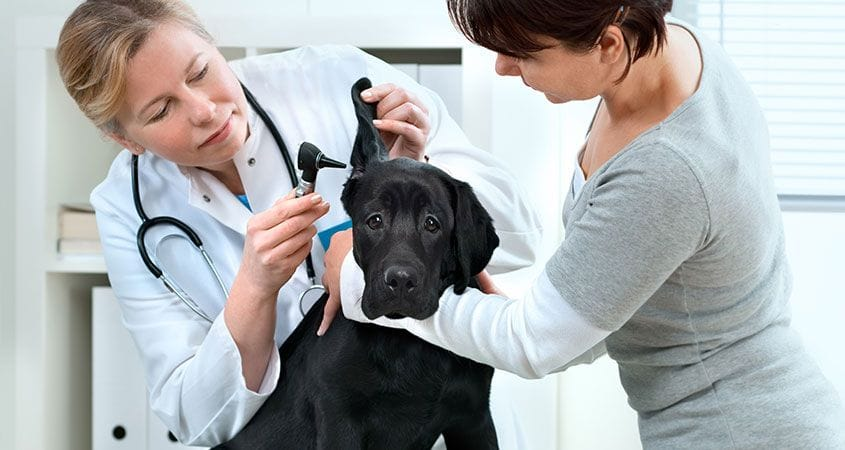 Things to Know About Choosing a Vet Clinic